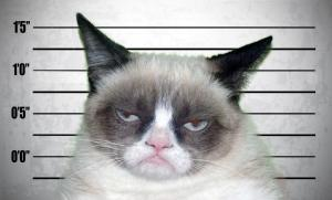 mugshot cat